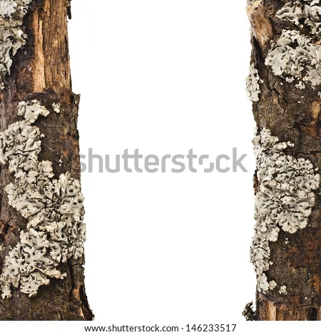 border frame of dry wood branches with lichen  close up isolated on a white background  - stock photo