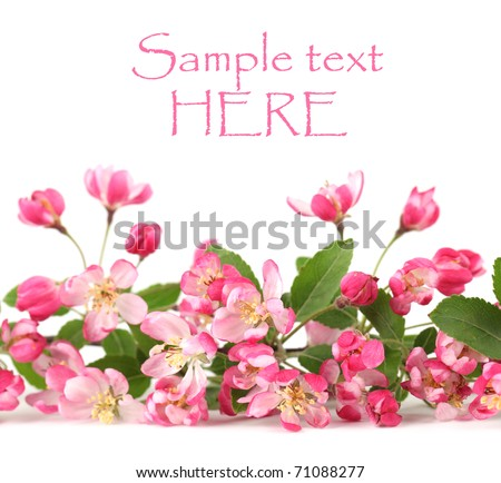 Border made of pink spring flowers isolated on white background - stock photo