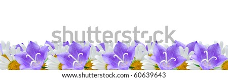 border of campanulas and camomiles isolated on a white background - stock photo