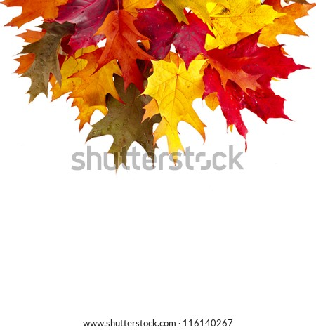 Border of colored falling leafs quercus rubra on white background - stock photo
