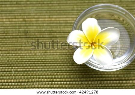 Border of Frangipani flowers in vase - stock photo