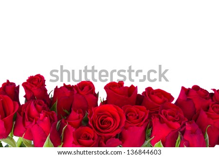 border  of fresh red garden roses  isolated on white background - stock photo
