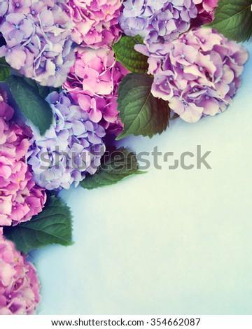 Border of hortensia flowers. - stock photo