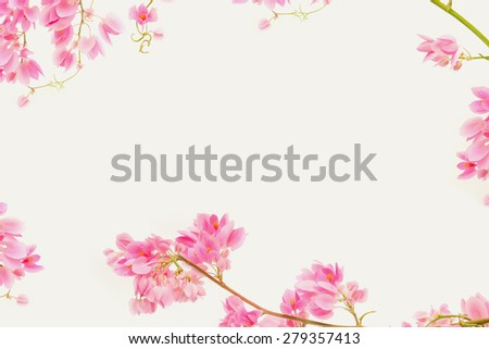 Border pink flower for put your text. Nature flower background. Pink flower on isolated background. Wedding flower background. Cute pink flower for put your text. Pink ivy flower border. Ivy flower - stock photo