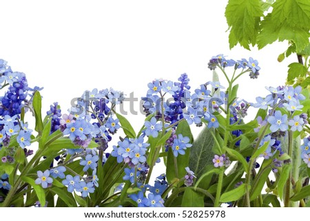 Border, postcard, background  from spring flowers  of forget-me-nots (Myosotis). Isolated on white. - stock photo