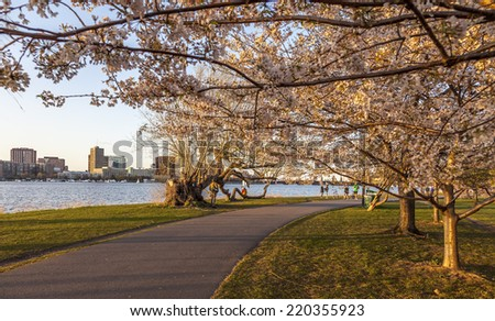 BOSTON, USA - APRIL 15, 2013: Panoramic view of Boston in MA, USA showcasing the Charles River and its famous cherry trees blossoming in the spring season on a warm day on April 15, 2013. - stock photo