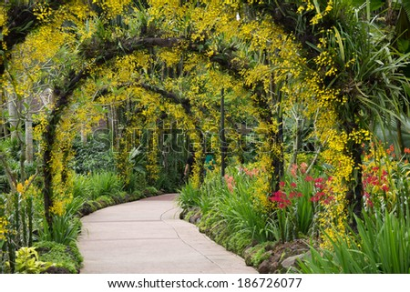 Botanic Gardens, Orchid garden - stock photo