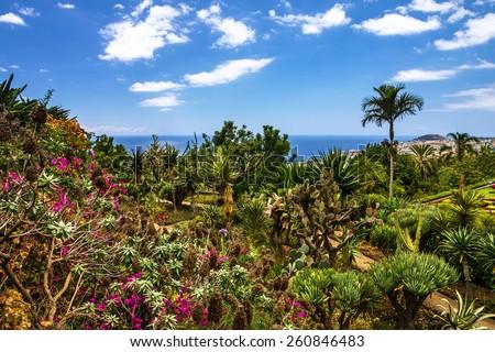 Botanical Garden Monte, Funchal, Madeira - stock photo