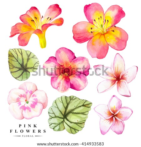 Botanical illustration with realistic tropical flowers and leaves. Watercolor collection of green begonia leaves, plumeria and lily. Handmade painting on a white background. - stock photo