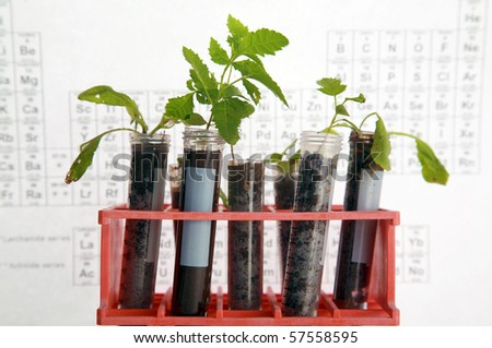 Botanical research, plants growing in test tubes in a research labratory - stock photo