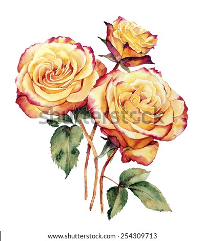 Botanical watercolor drawing with romantic composition of three yellow pink roses - stock photo