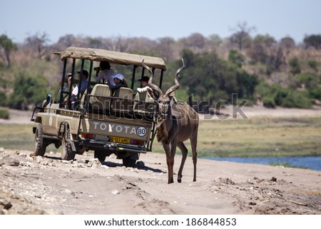 BOTSWANA - OCTOBER 6 2013: Kudu walks near tourist truck in a year of drought at Savuti Camp Site in Chobe National Park, Botswana - stock photo