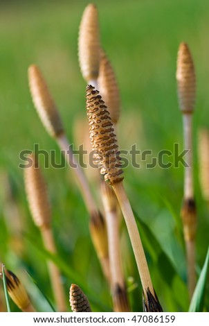 Bottle-brush - stock photo