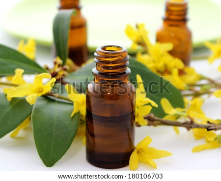 Bottle of essential oil and flowers forsythia isolated on white background - stock photo