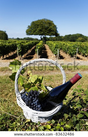 bottle of wine and grappes in basket - stock photo
