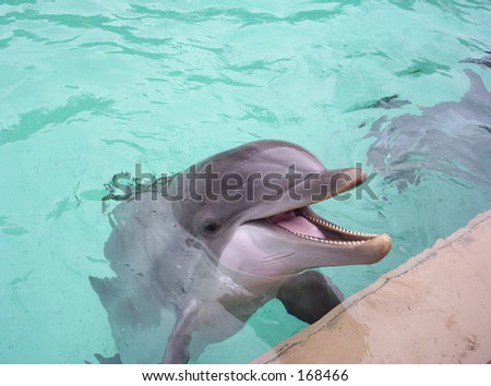 Bottlenose Dolphin at Seaworld Orlando - stock photo