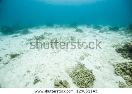 bottom of the ocean - stock photo