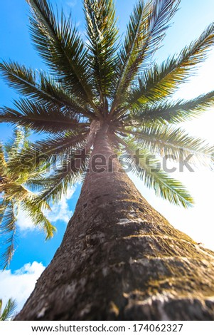 Bottom-up view of a beautiful palm tree with blue sunny sky - stock photo
