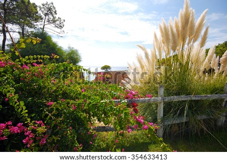 Bougainvillaea and reed on sky background. Landscape from Algarve, Portugal - stock photo