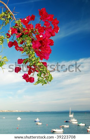 Bougainvillea blooming along a coast with a marina in the background - stock photo
