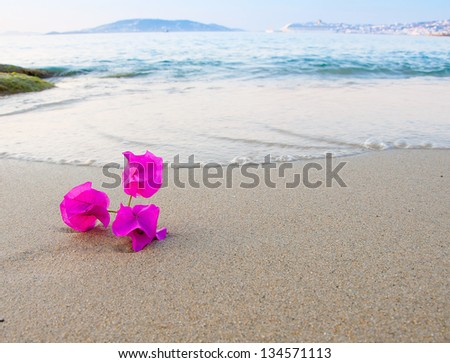 bougainvillea  flowers  in the sand at the azure sea - stock photo