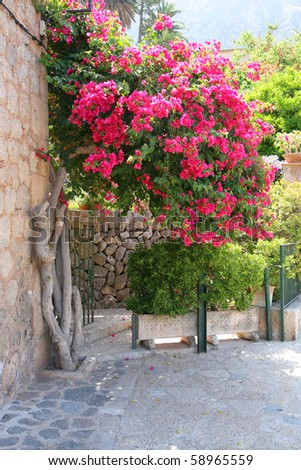 bougainvillea growing against stone wall in an old Mediterranean town - stock photo