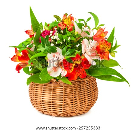 bouquet alstroemeria in basket isolated on white background - stock photo