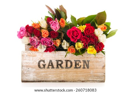 Bouquet colorful roses from garden isolated over white background - stock photo