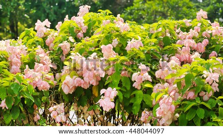 Bouquet light pink flower bloom on green natural background - stock photo