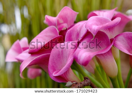 Bouquet of beautiful flowers. Floral pattern. - stock photo