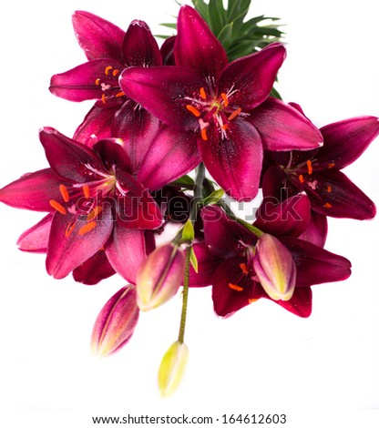 bouquet of beautiful lilies on white  - stock photo