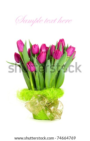bouquet of beautiful tulips isolated on white background with sample text. - stock photo