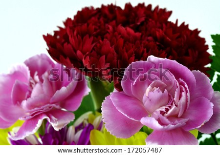 Bouquet of Beautiful Yellow, Red and Pink Carnation Flowers on white floor in sweet valentines - stock photo