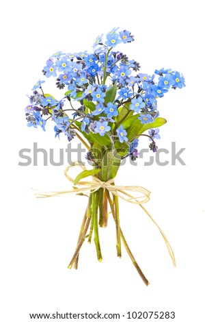 Bouquet of blue wild forget-me-not flowers tied with bow isolated on white - stock photo