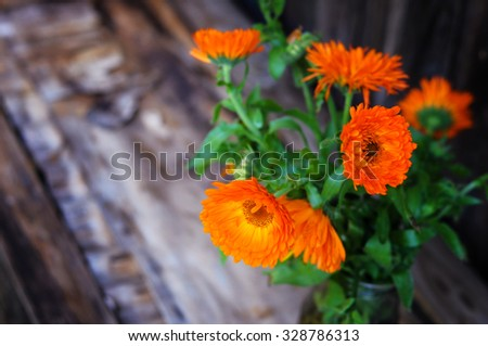 bouquet of calendula (Calendula officinalis L.) on vintage wooden board - stock photo