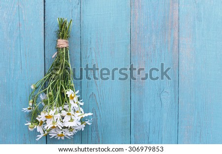 Bouquet of camomile on old blue wooden background - stock photo