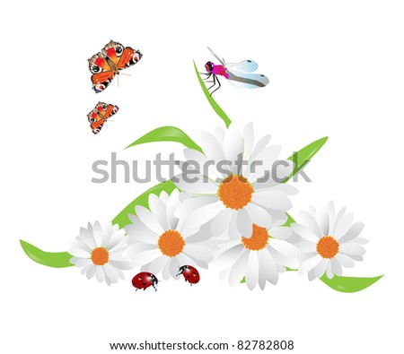 Bouquet of camomiles, ladybirds, butterflies and dragonfly. - stock photo