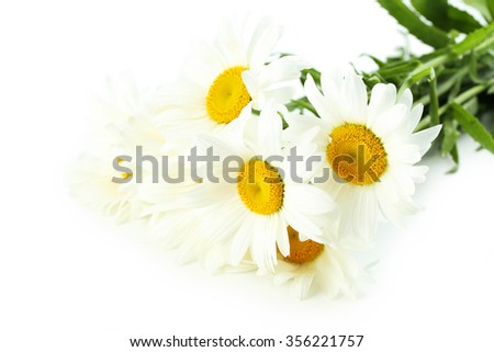Bouquet of chamomile flowers isolated on a white - stock photo