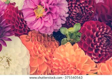 Bouquet of colorful dahlia - stock photo
