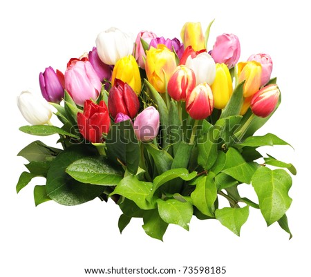 bouquet of colorful tulips isolated on white background - stock photo