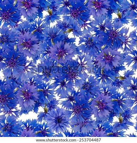 bouquet of cornflowers seamless pattern  isolated on white background - stock photo