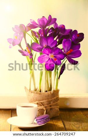 Bouquet of crocuses on bright background - stock photo