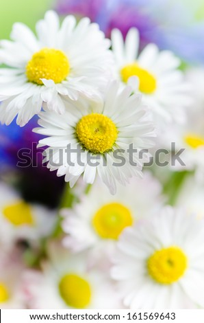 Bouquet of daisies and cornflowers close up - stock photo