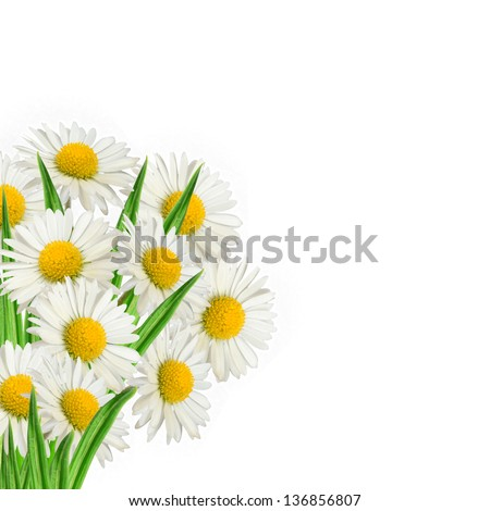 Bouquet of daisies on the white background - stock photo