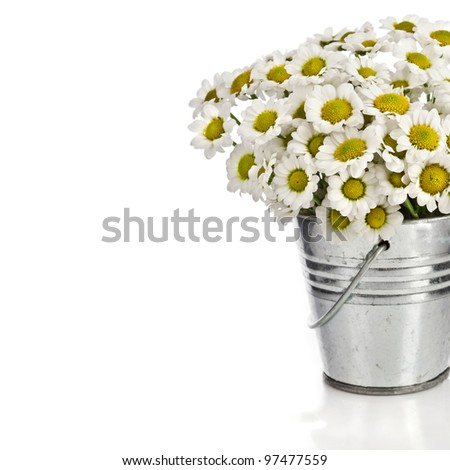 bouquet of daisy flowers in a bucket , border card oin white background - stock photo