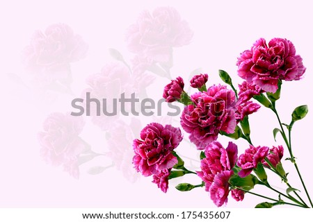 Bouquet of flowers carnation - stock photo