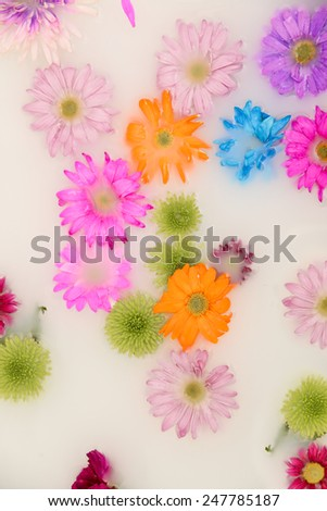 Bouquet of flowers in milk background - stock photo