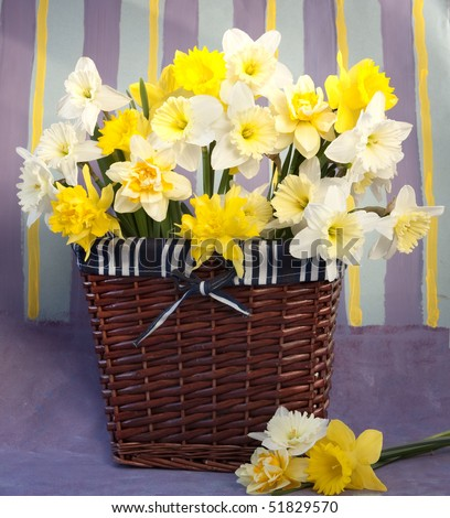 bouquet of flowers narcissus in the spring  in basket - stock photo