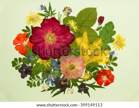 Bouquet of flowers on a light background. Pressed, dried rosehip, lily, geranium, violet, dandelion, clover and lupine. - stock photo