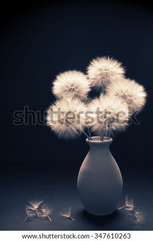 Bouquet of fluffy dandelions in vase on dark background. Toned image. - stock photo